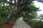 Дорожка вдоль моря