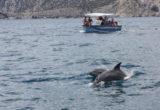 На катере с дельфинами